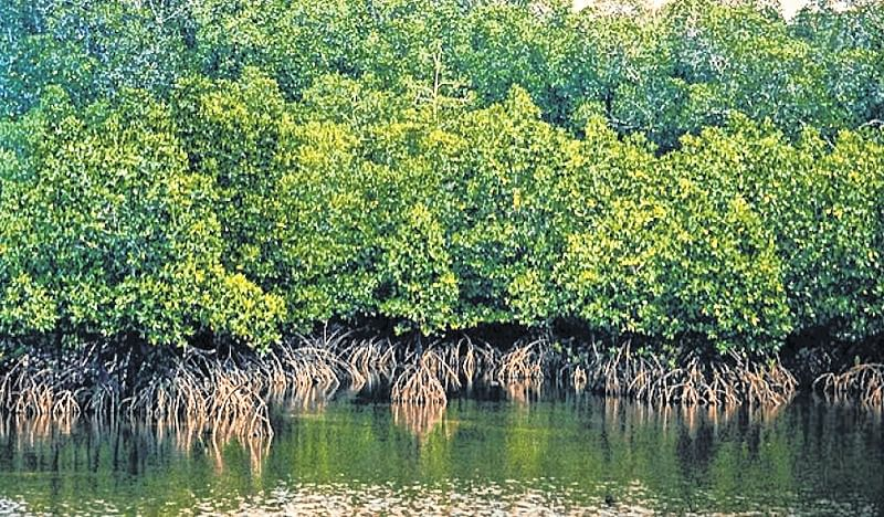 FPJ Impact: Over 2k acres mangrove land will get forest tag