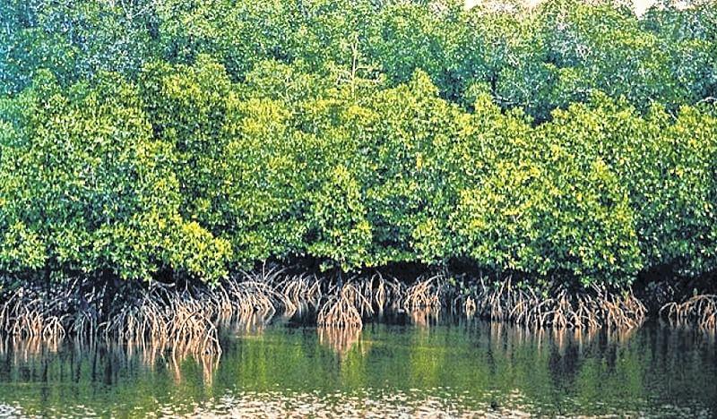 Maharashtra government notifies 2467.62 hectares of mangroves