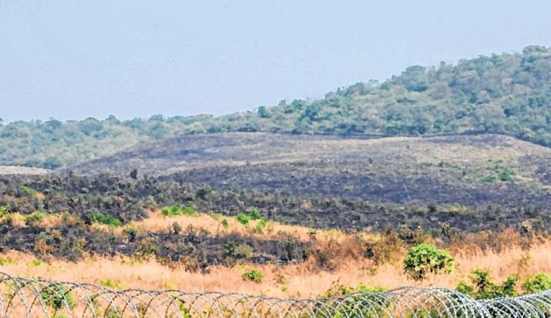 Mumbai: Anti-social elements behind Aarey colony fire, says report