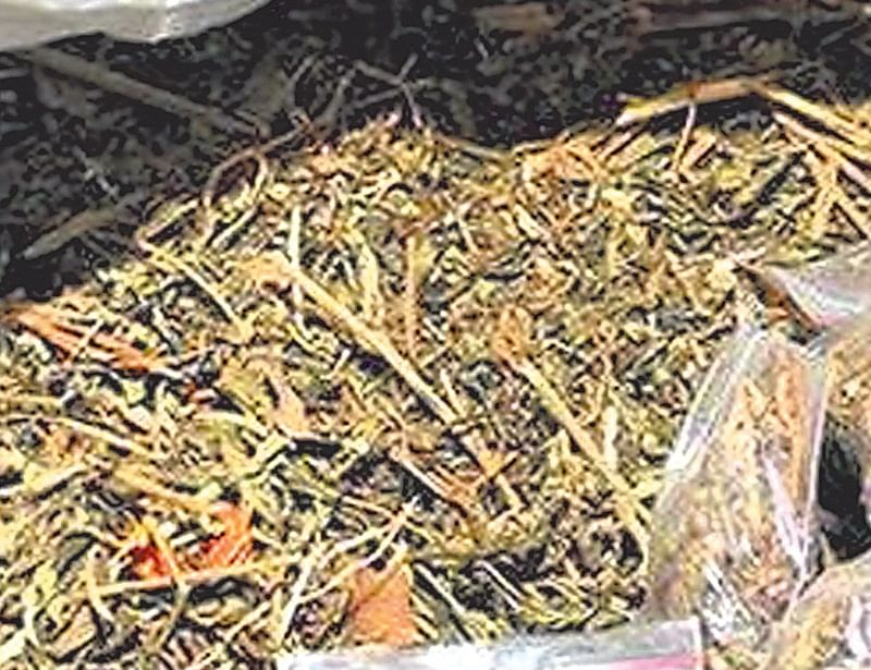 Indore: Two arrested with cannabis worth Rs 42 lakh