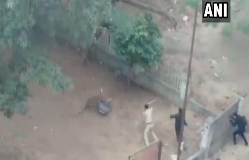 Maharashtra: 3 including Shiv Sena corporator injured after leopard enters crowded Nashik area, caught
