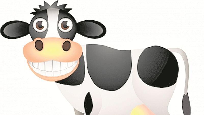 Cows lay eggs, as per kids in UK!
