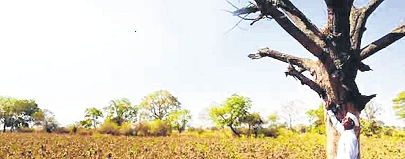 Another 931 villages declared drought-affected in Maharashtra