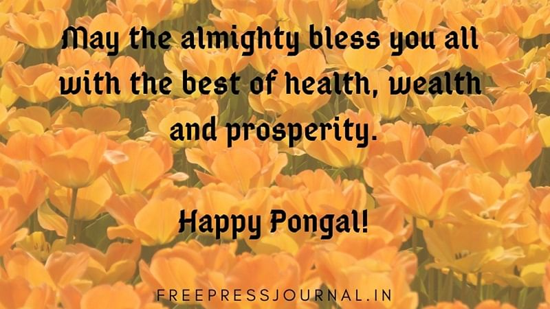 Pongal 2021: Wishes, Greetings, Quotes, Messages to share on Facebook, Whatsapp, and Instagram