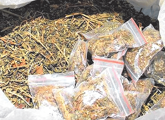 Indore: Man held with 7.8 kg cannabis