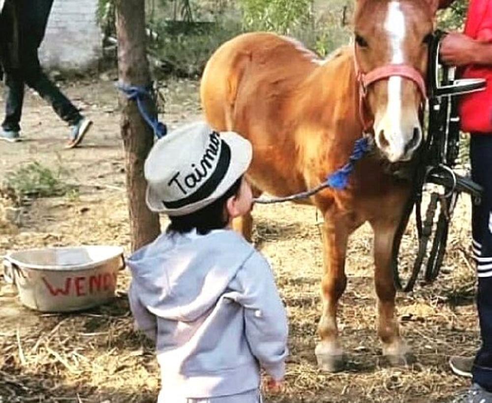In Pic: Taimur Ali Khan chills with a pony, befitting his royal lineage