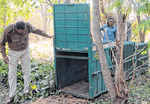 Bhopal: Post leopard sighting, cages, trap cameras installed in Shahpura area