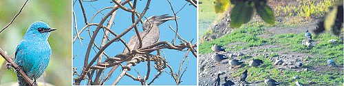 Bhopal: Rare, migratory birds spotted