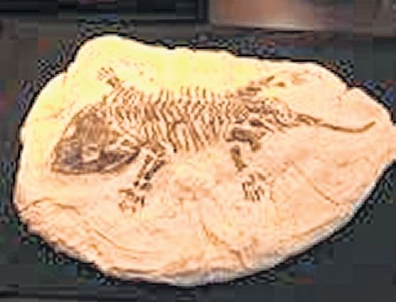 Indore: Need law to protect, preserve fossils: Paleontologist Sahni