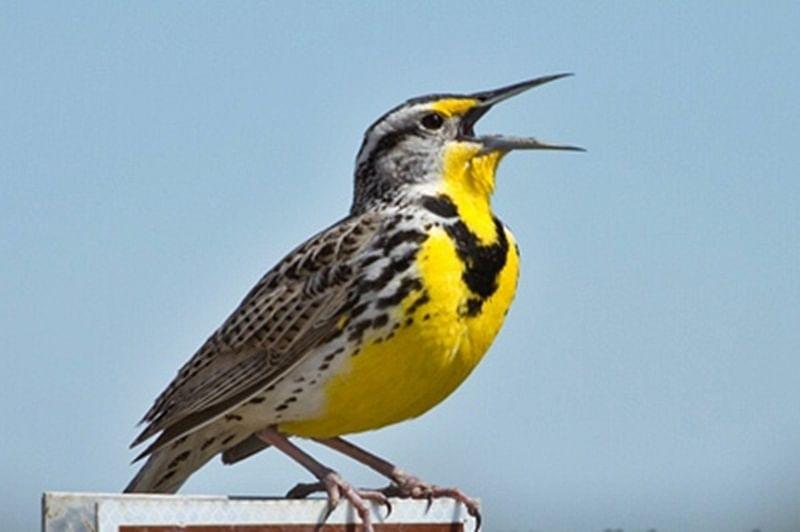 Bird calls similar to human language