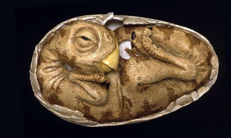 World's oldest eggs shed new light on dinosaur evolution