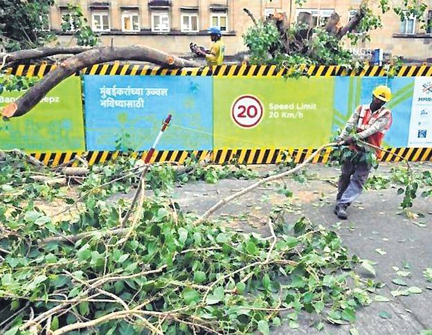 SC stays felling of trees for metro project in Mumbai, transfers activist's plea to Bombay HC