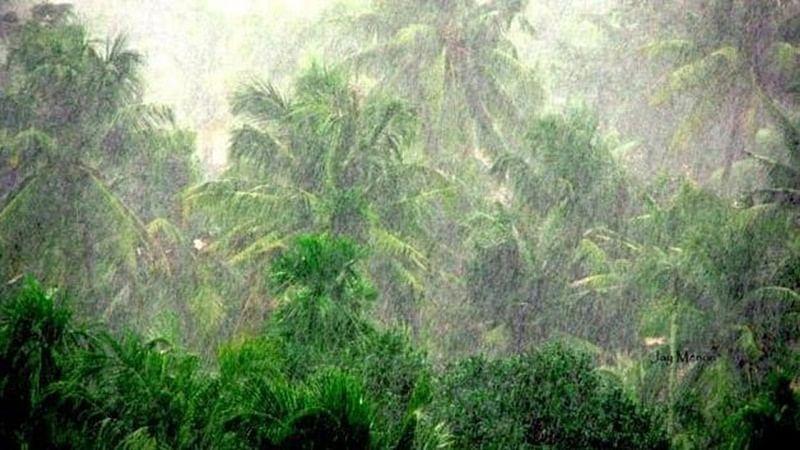 Maharashtra: Unseasonal rains lash Konkan region