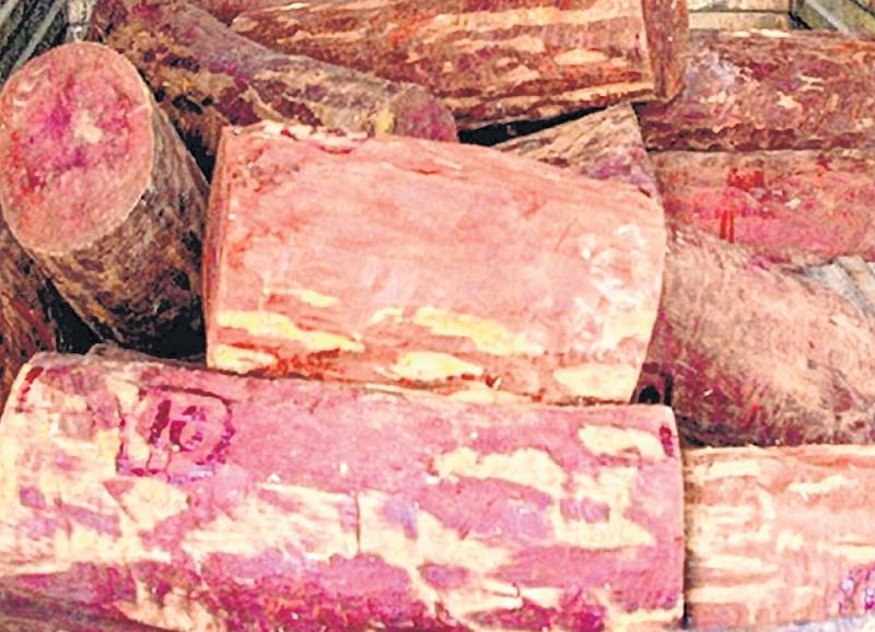 Mumbai: Red Sandalwood smuggling: Wood was to be transported to China