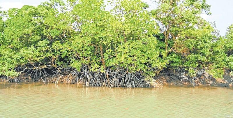 Maharashtra State Road Development Corporation pays Rs 72 lakh for afforestation