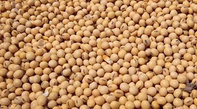 SOPA asks SEBI to ban futures trading in soybean