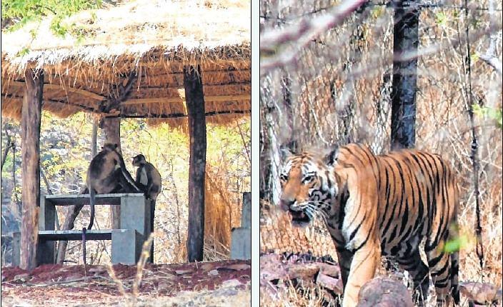 Bhopal: Soon coolers, sprinklers for Van Vihar inmates to beat the heat