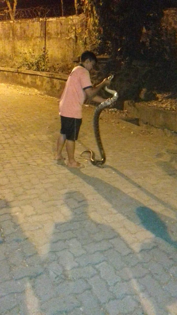 Mumbai: 7 feet long Rock Python found in BMC employees house in Bhandup