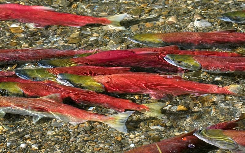 Fish warn via chemical about a possible threat