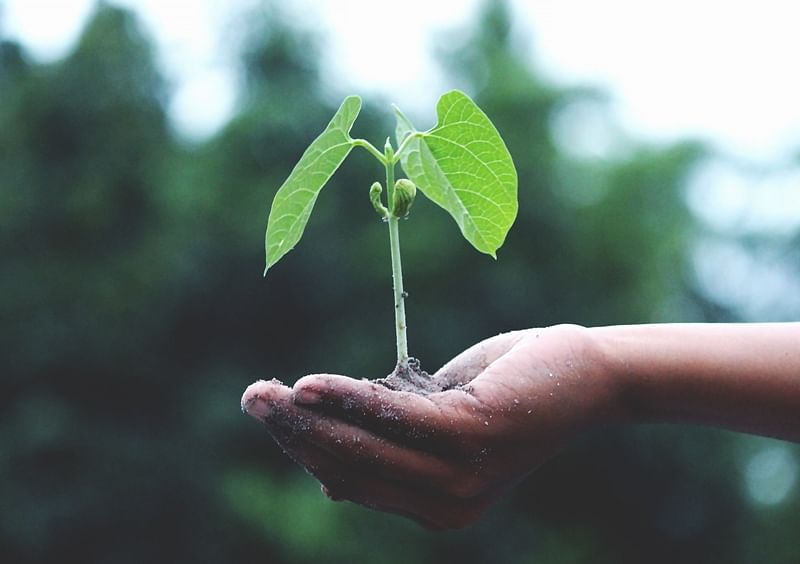 Indore: Saplings of medicinal plants distributed at old age home