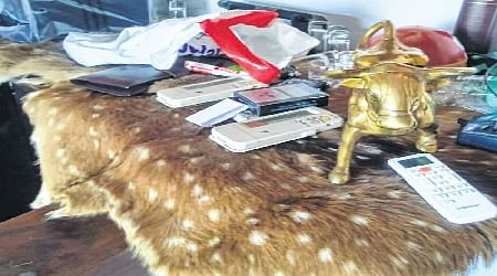 Income-Tax Raids: Trophies, hides of tiger, black buck found at Ashwini's residence