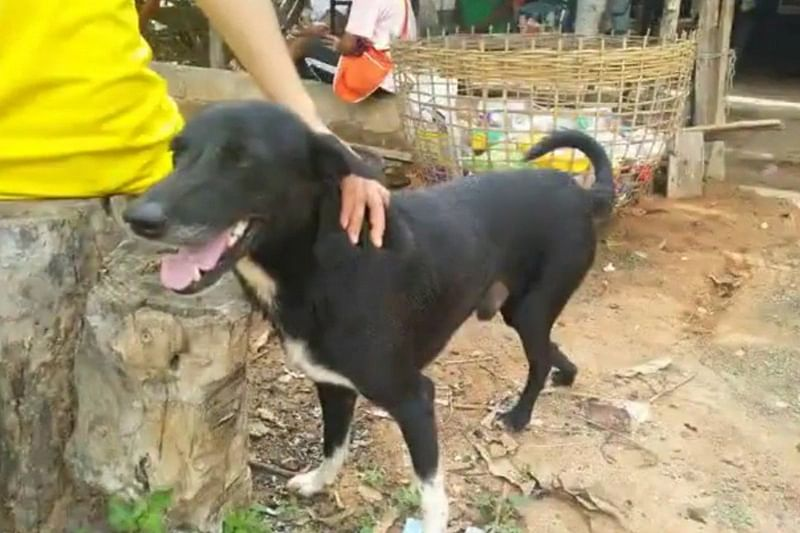 Disabled dog rescues baby buried alive in Thailand