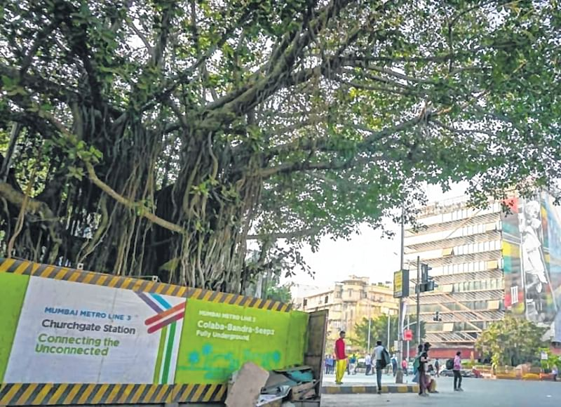 Mumbai: Activist won't permit axing of trees near Eros Theatre