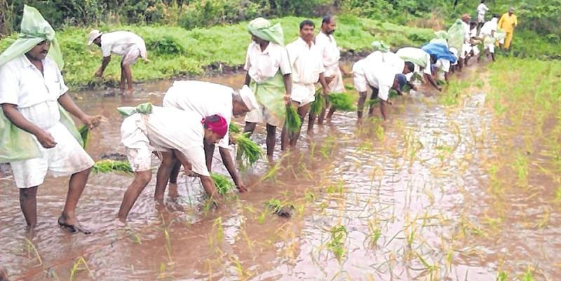 Maharashtra: Yerwada inmates turn farmers, earn Rs 68 lakh through farming on 35 acres