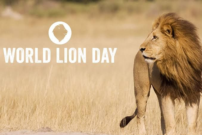 World Lion Day 2021: Date, significance and amazing facts about king of the  jungle
