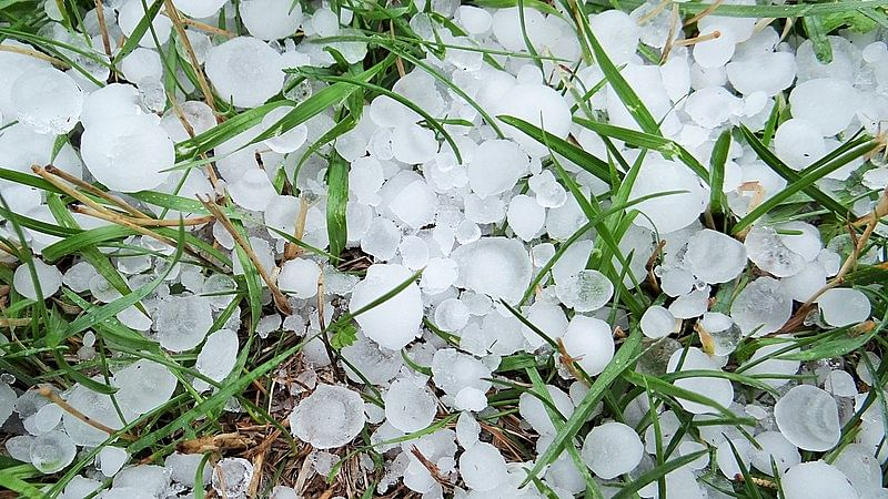 Hailstorm uproots trees, damages rooftops in Baramulla