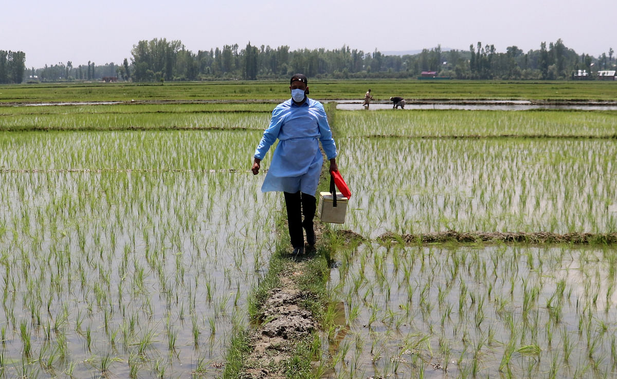 A health worker walks along the paddy fields as the open air vaccination drive continues in Kashmir, on Saturday 5, June 2021.