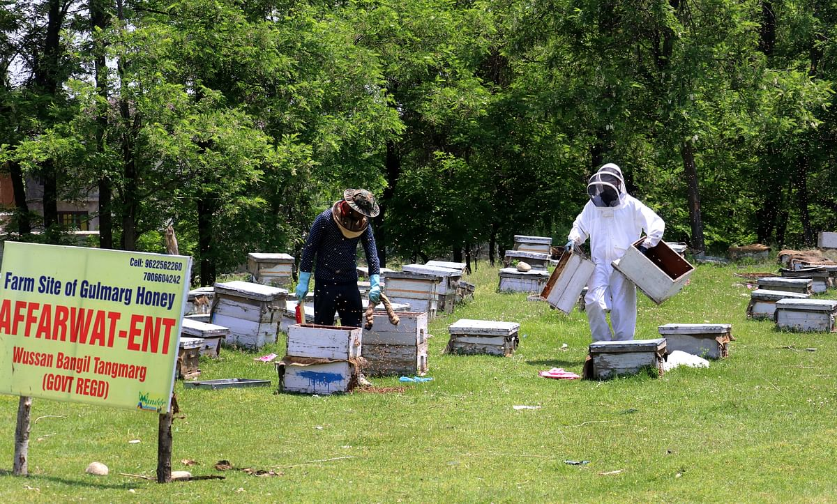 Hilal Ahmad Wani, who owns the beekeeping farm in the area, said the production of the honey has gradually decreased due to environmental pollution.
