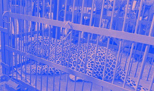 Leopard kills minor girl in Ganderbal