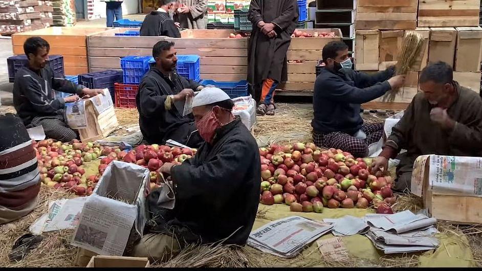 Paucity of cold stores impacting apple economy