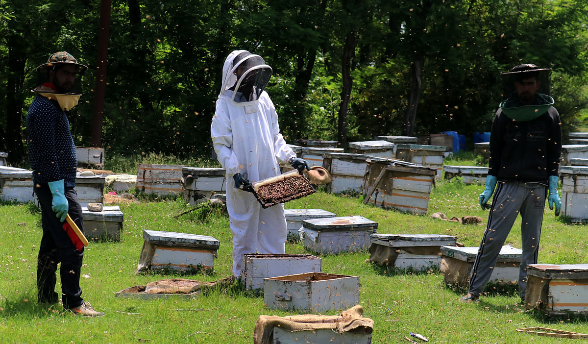 As per Hilal the monthly production of honey per colony has decreased from 15 KG in 2010 to 3 KG in 2020.