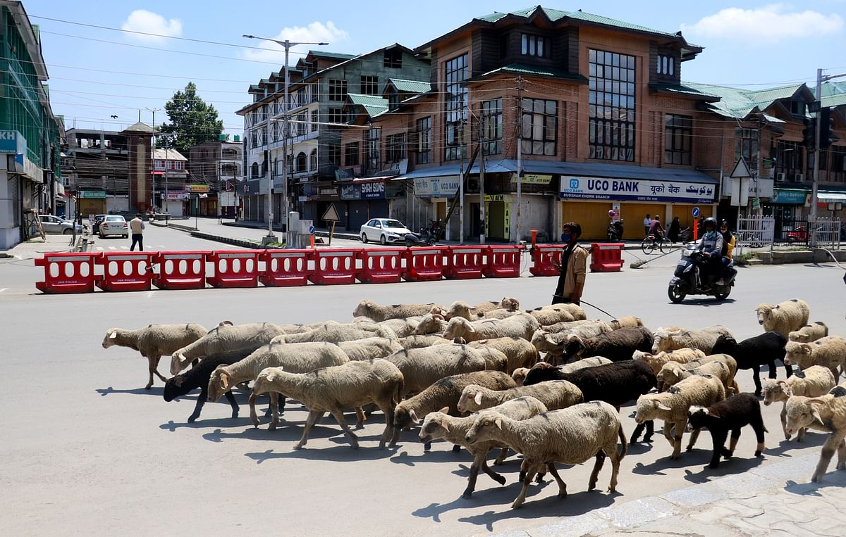 Foot-and-mouth disease outbreak hits Budgam villages, farmers in distress