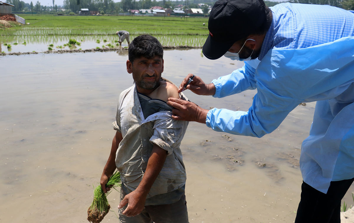 A farmer gets inoculated as he plants paddy saplings in a farm in north Kashmir's Pattan, on Saturday 5 June, 2021.