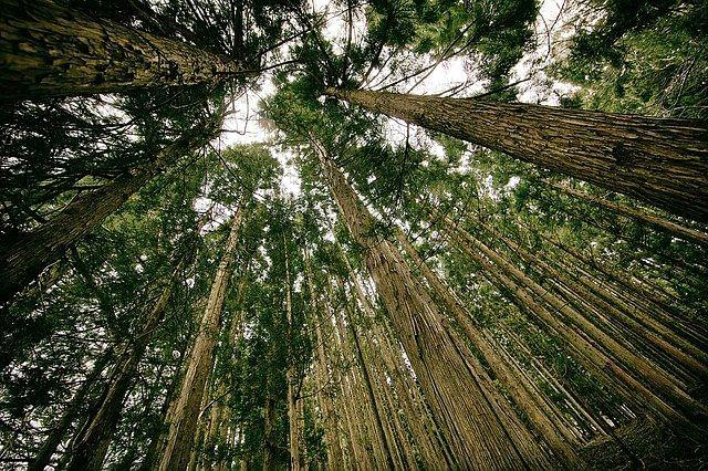 Jammu & Kashmir and environmental challenges