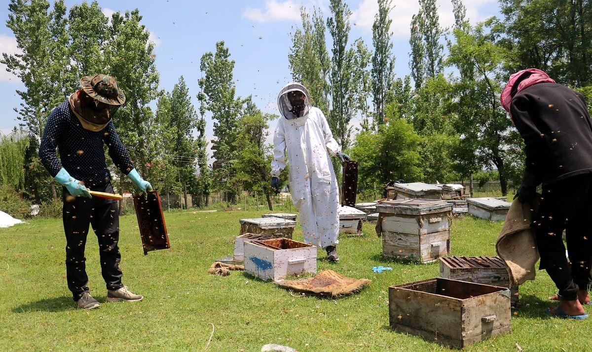 In Frames: Beekeeping & Honey Harvesting