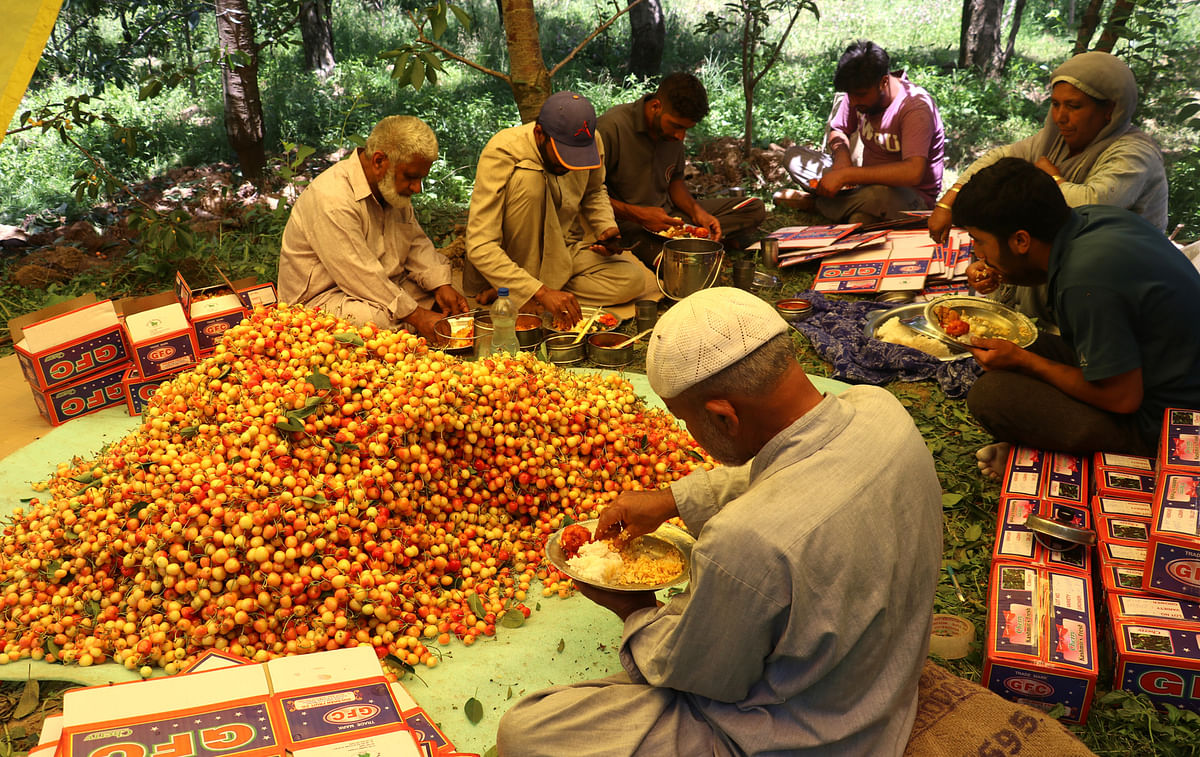 Horticulture generates Rs 10,000 cr revenue annually