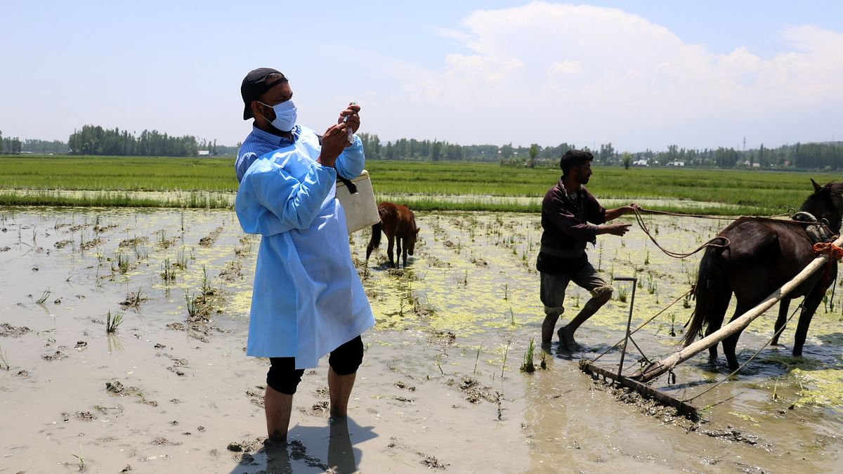 In Frames: Open Air COVID-19 Vaccination Drive In Paddy Fields