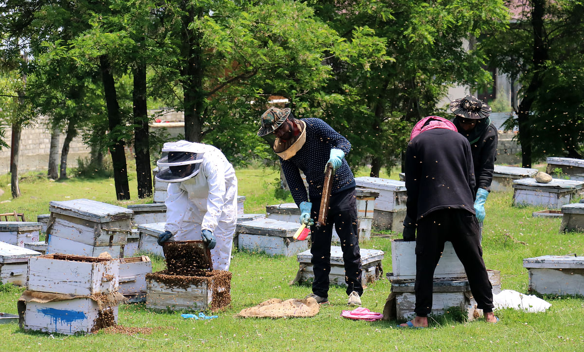 The Beekeepers in Kashmir migrate to warmer places like Jammu and Gujrat along with their hives to protect their bee colonies from harsh winter in the Himalayan region.