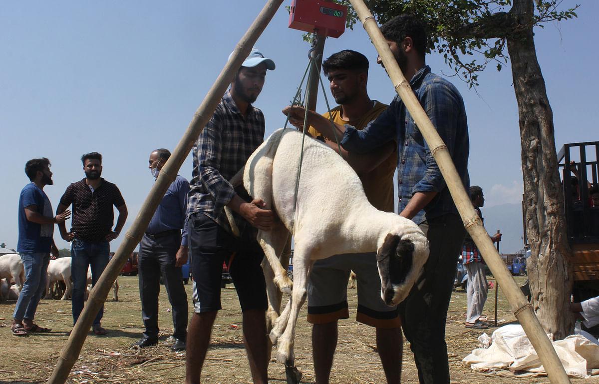 SMC to collect hides of sacrificial animals