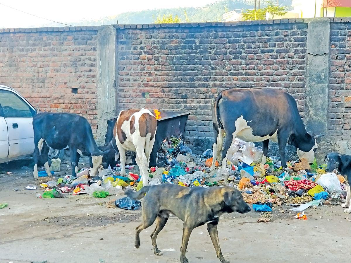 Rajouri town facing difficulty in garbage disposal