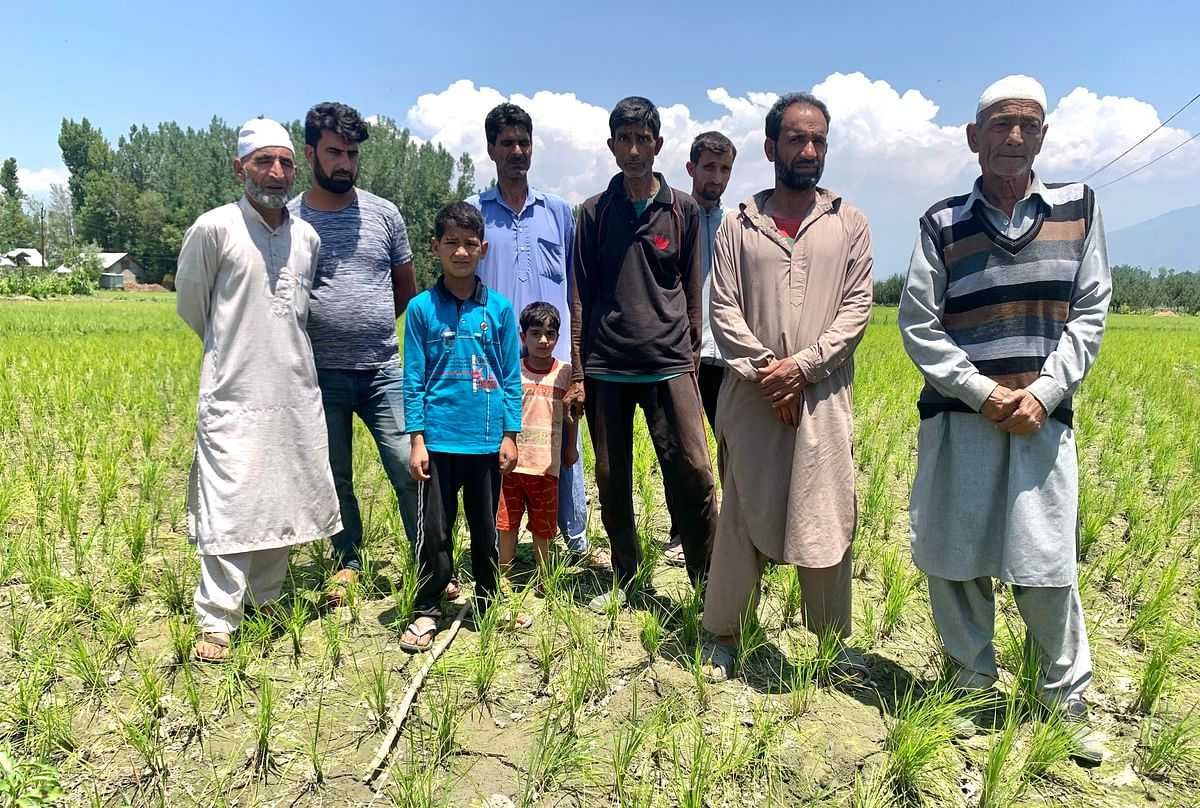 Paddy crop on verge of drying up in Pulwama due to defunct water pump, farmers worried