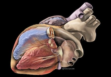 Usefulness of Biomarkers for Acute Heart Diseases