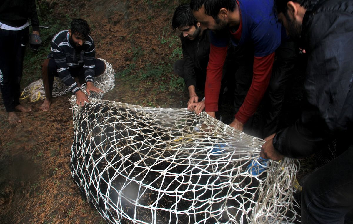 Bear, 2 cubs rescued from Tangmarg