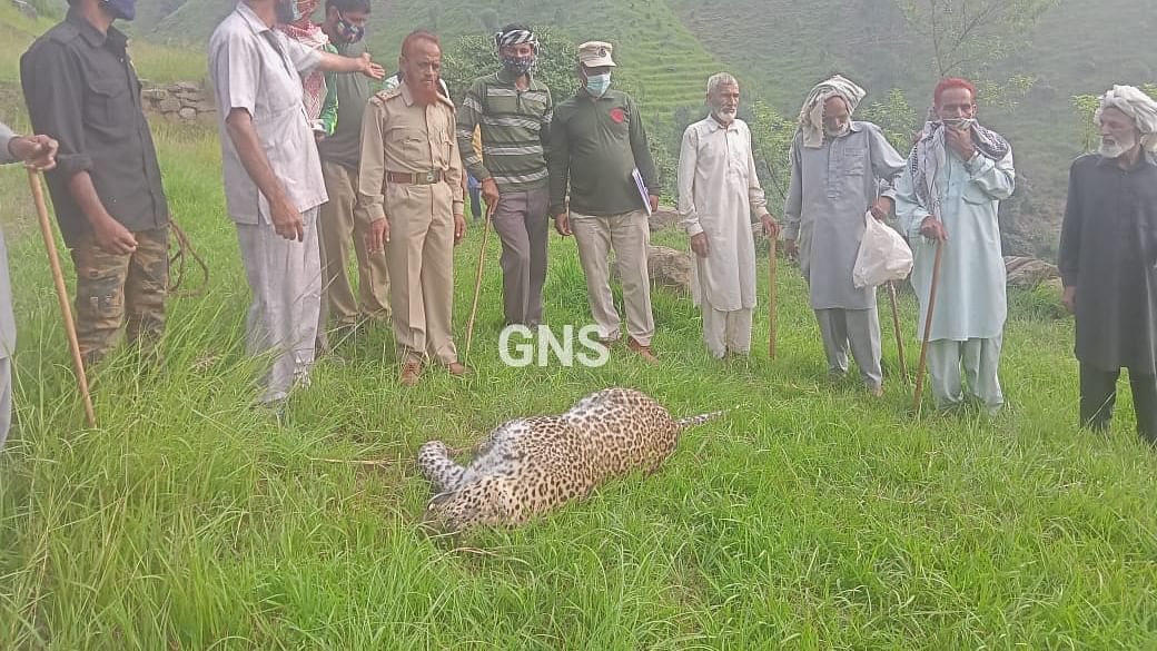 Female leopard carcass found in J&K's Poonch