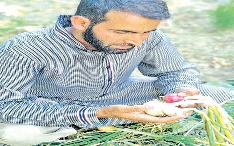 Pulwama farmer's date with progressive farming