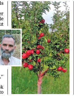 Anantnag grower brings Washington Super Chief to Kashmir